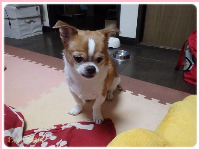 f:id:yasukazu01:20150205224003j:image