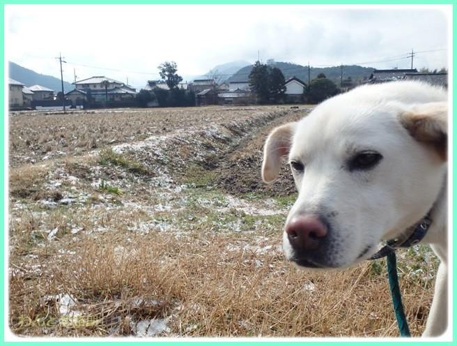 f:id:yasukazu01:20150206202604j:image