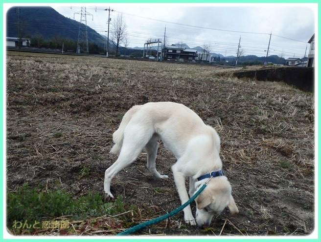 f:id:yasukazu01:20150206203131j:image