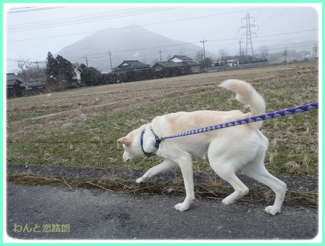 f:id:yasukazu01:20150209213239j:image