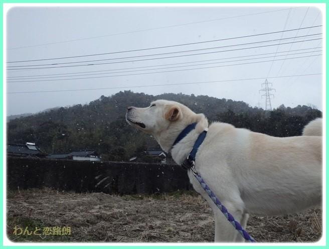 f:id:yasukazu01:20150209213344j:image