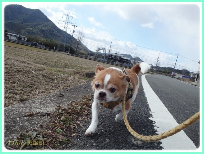 f:id:yasukazu01:20150209213829j:image