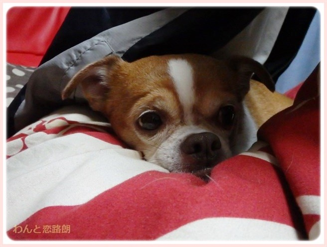 f:id:yasukazu01:20150222212954j:image