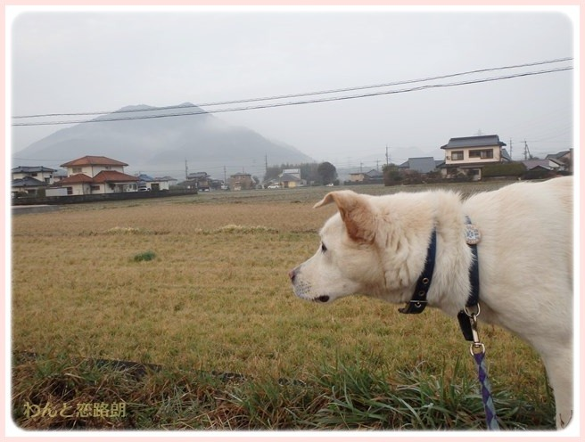 f:id:yasukazu01:20150223213107j:image