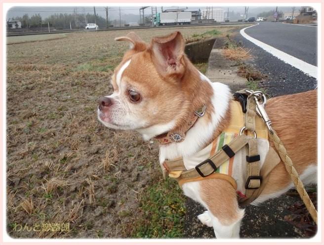 f:id:yasukazu01:20150223213310j:image