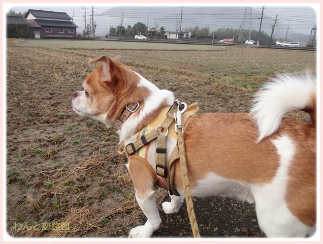 f:id:yasukazu01:20150223213445j:image