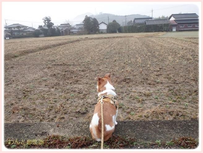 f:id:yasukazu01:20150223213635j:image