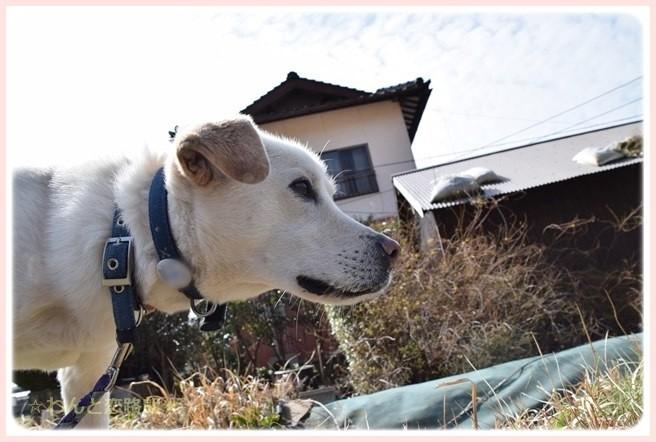 f:id:yasukazu01:20150226230234j:image