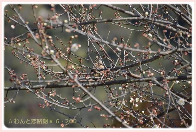 f:id:yasukazu01:20150228223927j:image