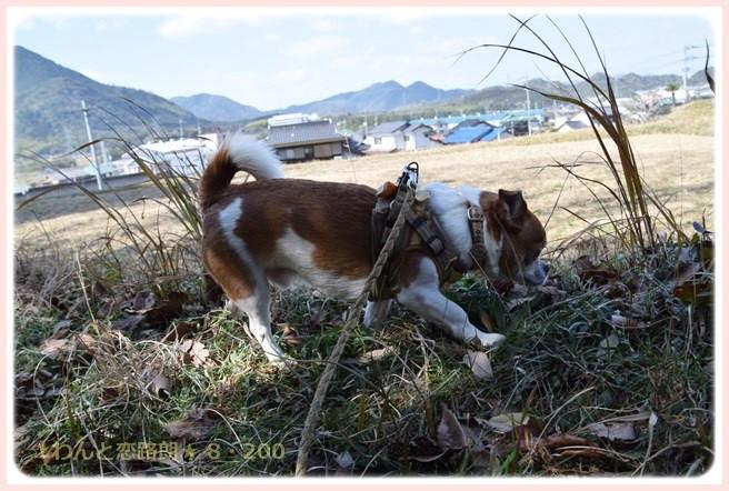 f:id:yasukazu01:20150228224932j:image