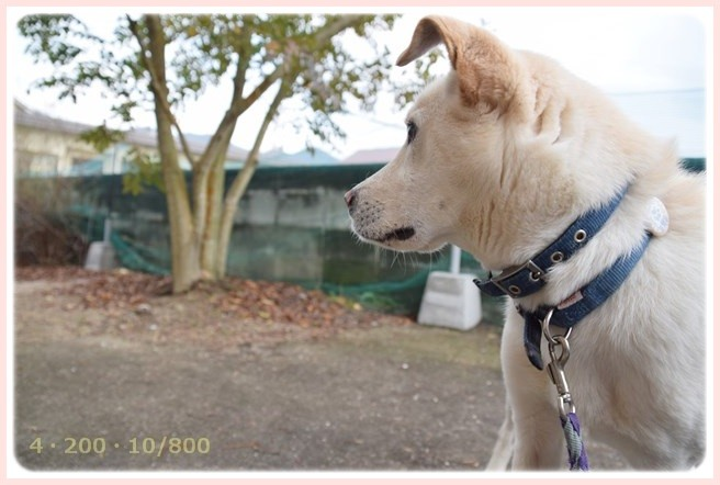 f:id:yasukazu01:20150301204206j:image