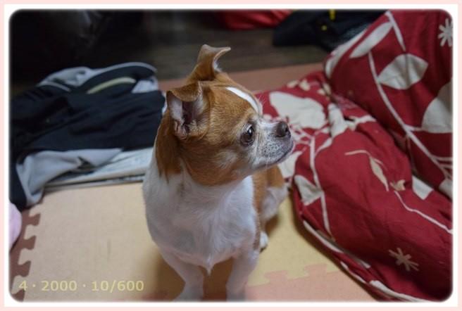 f:id:yasukazu01:20150302230948j:image