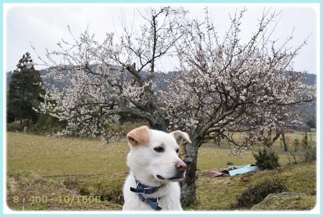 f:id:yasukazu01:20150303211912j:image