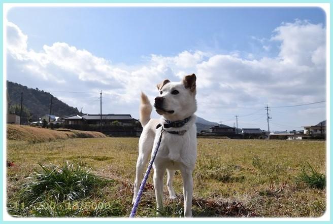 f:id:yasukazu01:20150304204728j:image