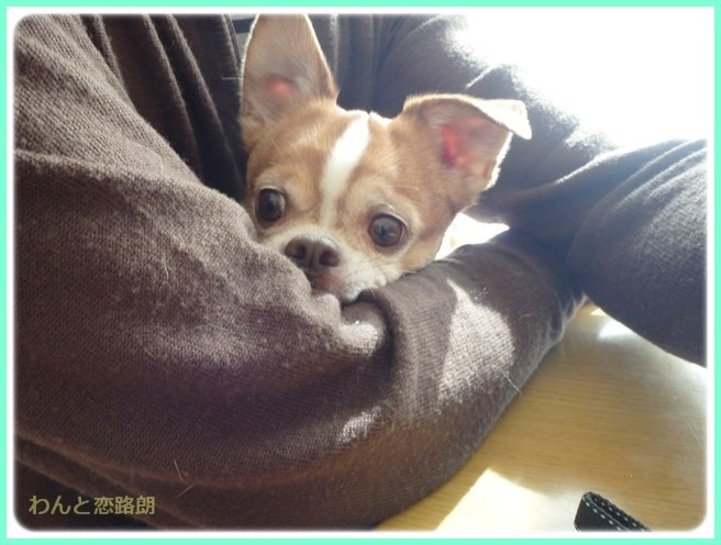 f:id:yasukazu01:20150306222535j:image