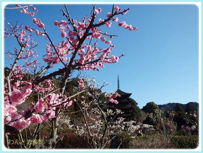 f:id:yasukazu01:20150309221322j:image