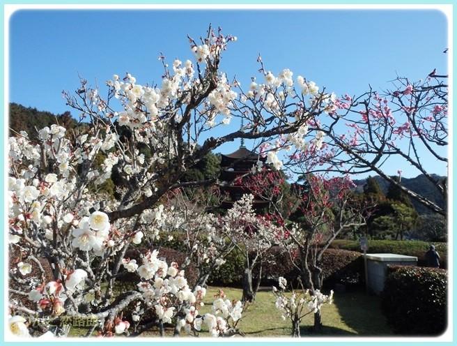 f:id:yasukazu01:20150309221653j:image