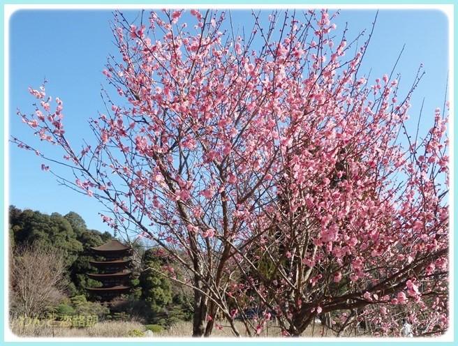 f:id:yasukazu01:20150309221855j:image