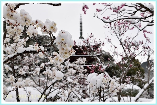 f:id:yasukazu01:20150313205216j:image