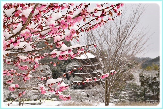 f:id:yasukazu01:20150313205348j:image