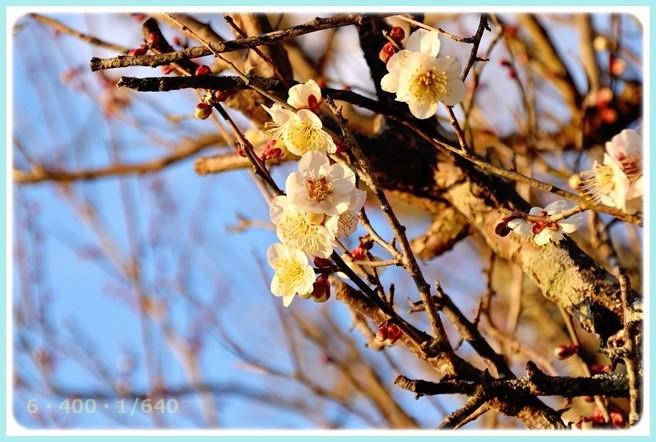 f:id:yasukazu01:20150313211851j:image