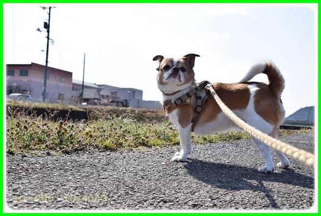 f:id:yasukazu01:20150314201123j:image