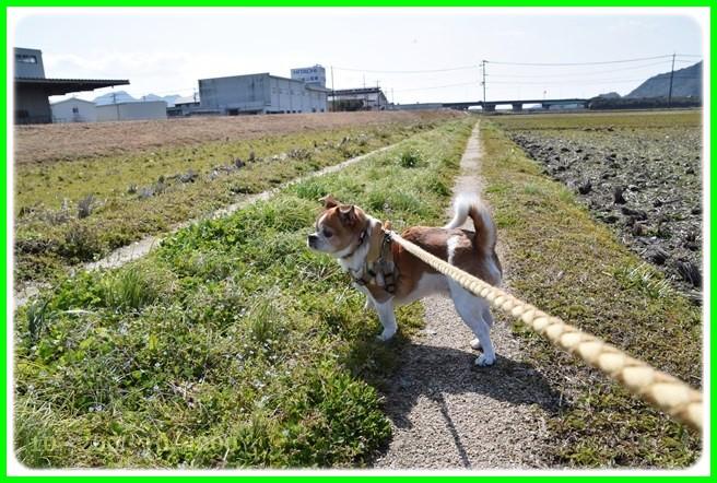 f:id:yasukazu01:20150314201252j:image
