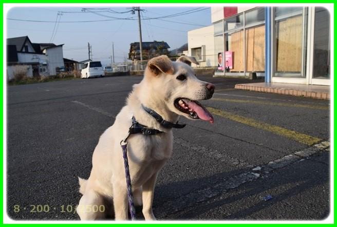 f:id:yasukazu01:20150316225018j:image