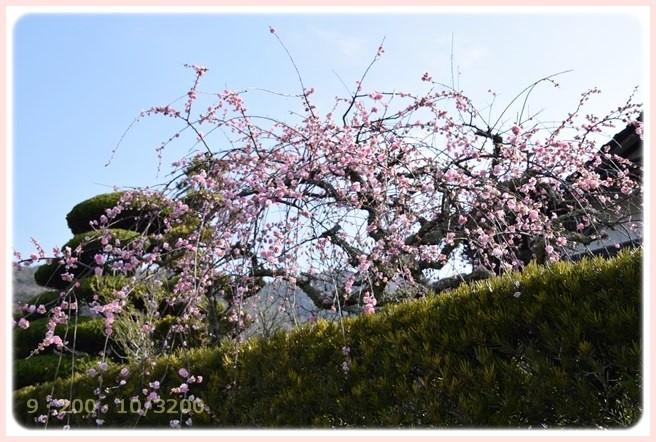 f:id:yasukazu01:20150317194120j:image