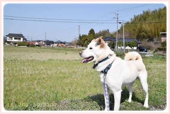 f:id:yasukazu01:20150321205146j:image