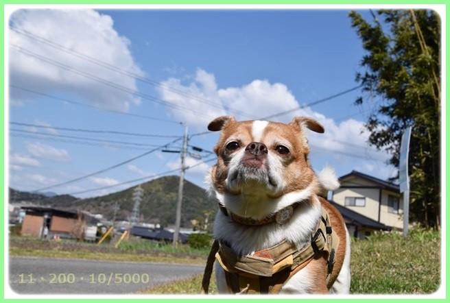 f:id:yasukazu01:20150325210915j:image