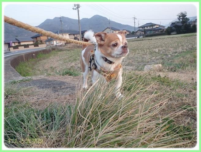 f:id:yasukazu01:20150326232545j:image