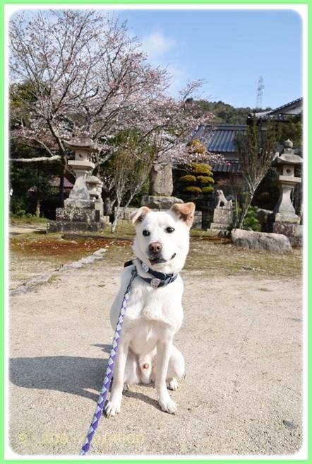 f:id:yasukazu01:20150329211659j:image