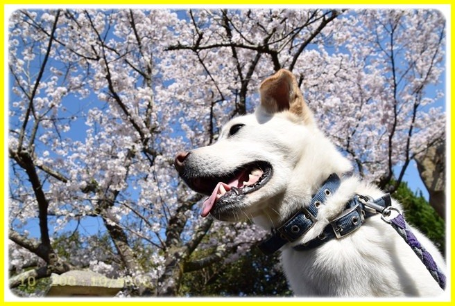 f:id:yasukazu01:20150402212429j:image