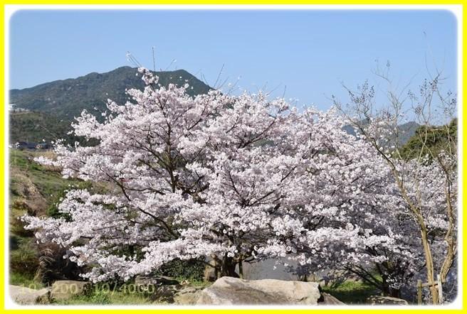 f:id:yasukazu01:20150402213307j:image
