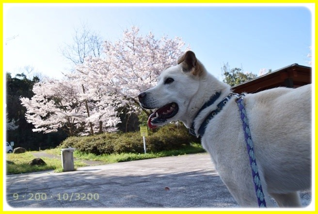 f:id:yasukazu01:20150402213543j:image