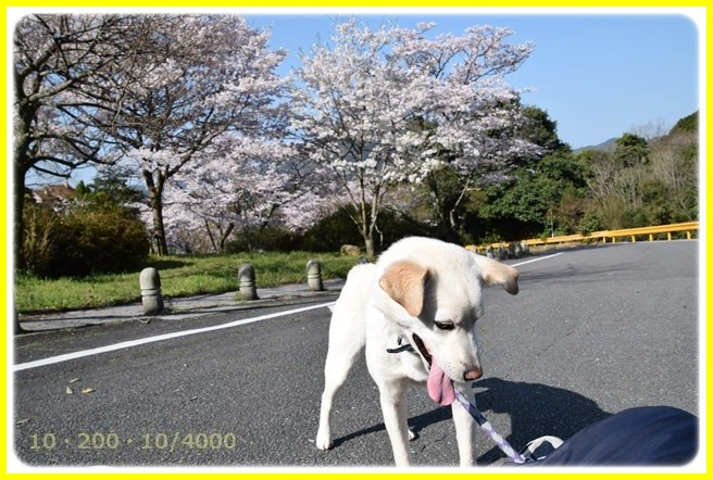 f:id:yasukazu01:20150402213818j:image