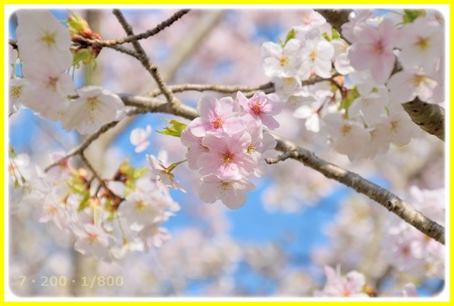 f:id:yasukazu01:20150403223821j:image