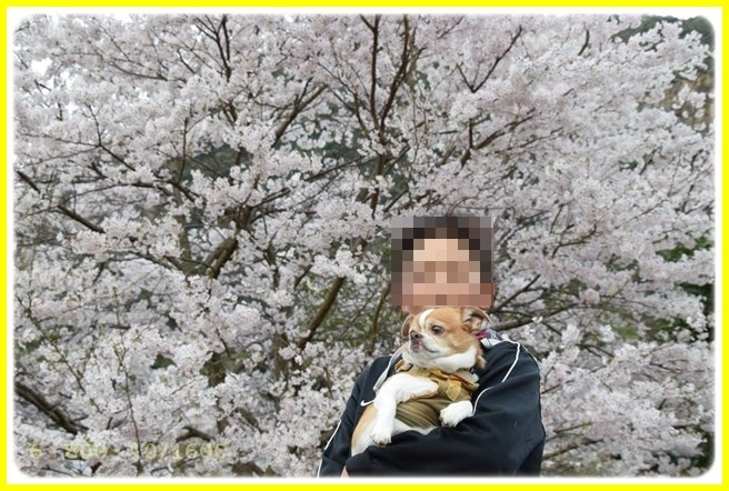 f:id:yasukazu01:20150403224109j:image