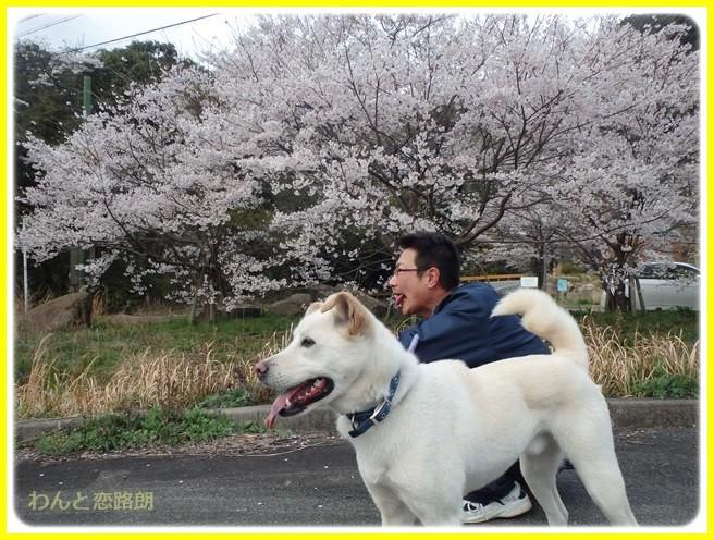 f:id:yasukazu01:20150403224351j:image