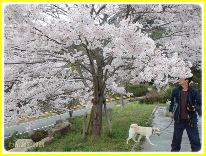 f:id:yasukazu01:20150403224858j:image