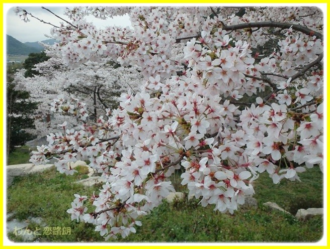 f:id:yasukazu01:20150403224948j:image