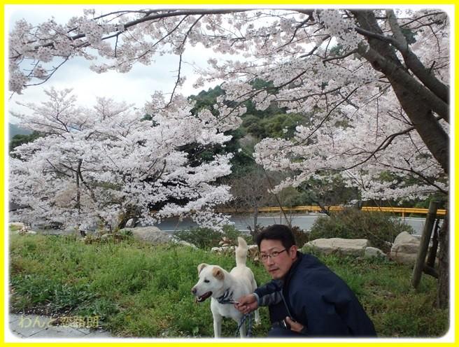 f:id:yasukazu01:20150403225051j:image