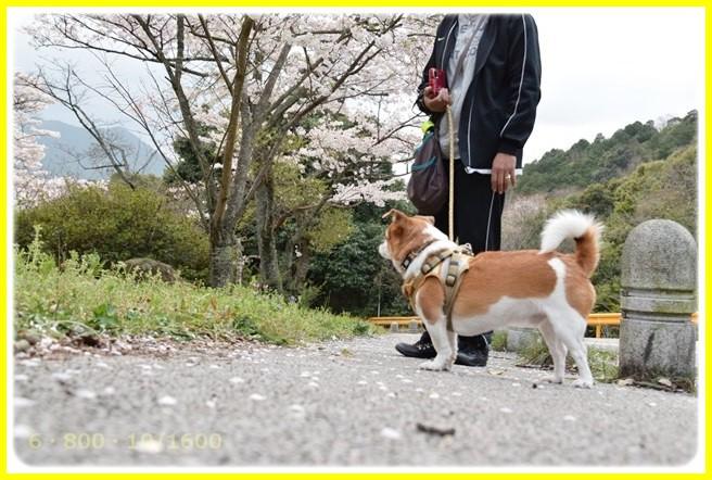 f:id:yasukazu01:20150403225243j:image
