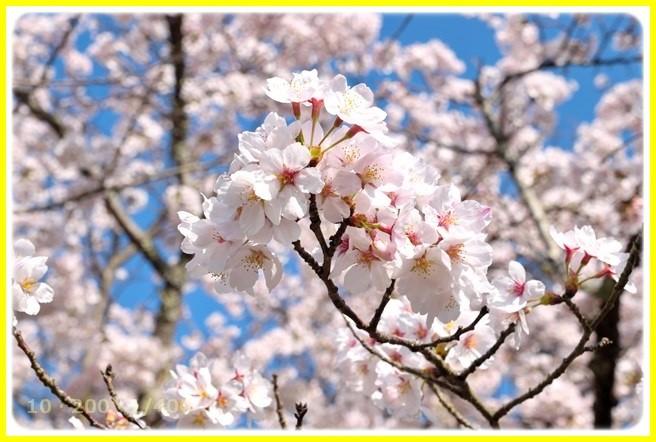f:id:yasukazu01:20150403225721j:image