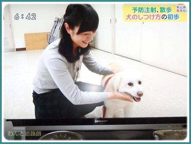 f:id:yasukazu01:20150405201725j:image
