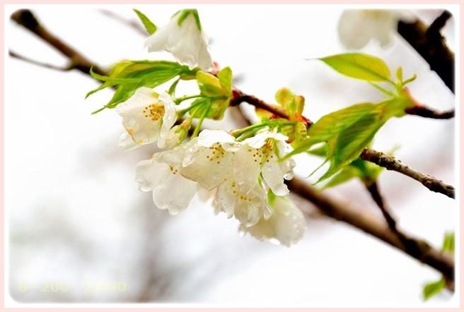 f:id:yasukazu01:20150407202850j:image