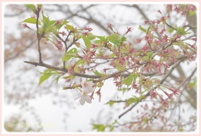 f:id:yasukazu01:20150407203238j:image