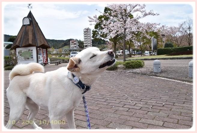 f:id:yasukazu01:20150408223640j:image