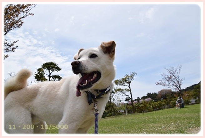 f:id:yasukazu01:20150408224520j:image